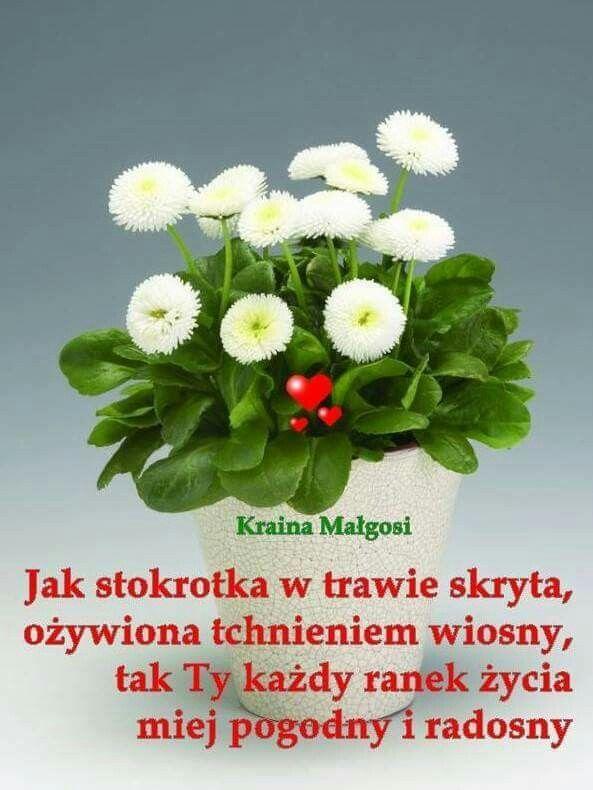 Pin By Wanda Swoboda On Dzien Dobry Inspirational Words Good Morning Flowers