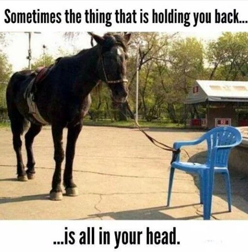Sometimes the thing holding you back is all in your head. Horse tied to a chair