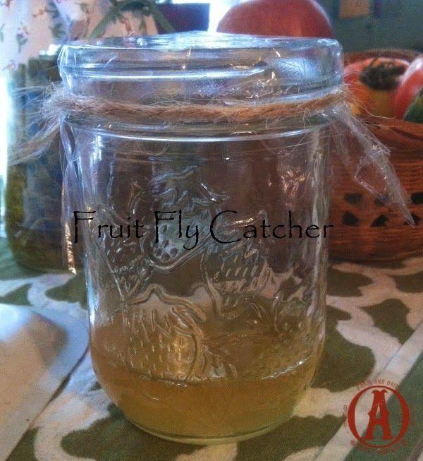 One Ash Plantation Homestead: Tips & Tricks- Fruit Fly Catcher
