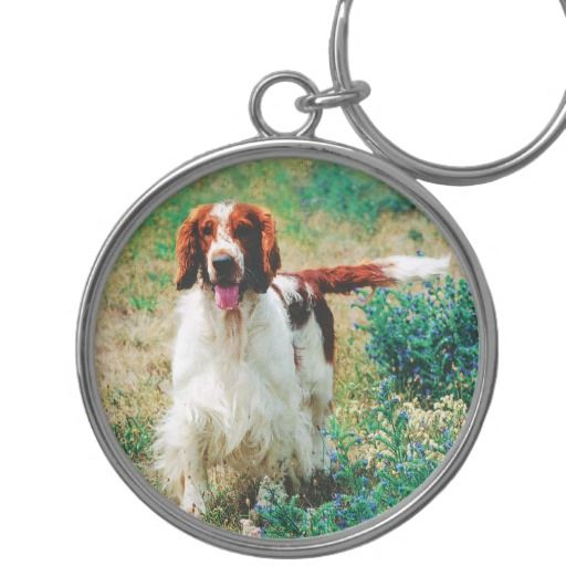 Welsh Springer Spaniel in field Premium Keychain. PREMIUM ROUND KEYCHAIN  The waterproof, UV coating means your images will look like new for years. Great gifts for all your family and friends. Full-color, full-bleed printing Silver Colored Metal Charm & Ring UV Resistant and Waterproof