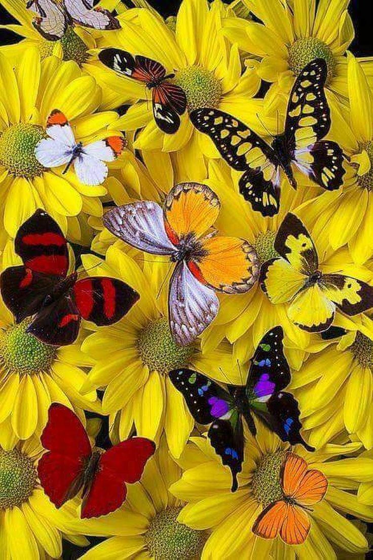 Good morning - Ramazan bozdağ - Google+