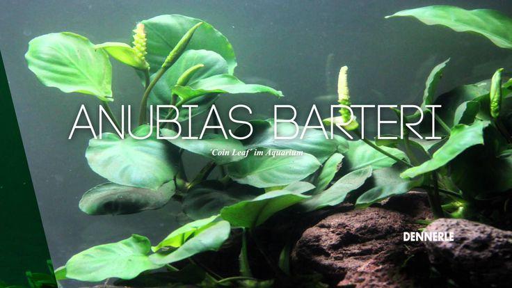 Aquarienpflanzen-Neuheiten 2015