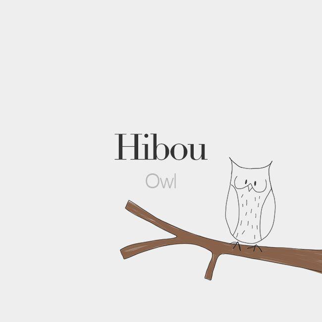 Hibou (masculine word) | Owl | /i.bu/