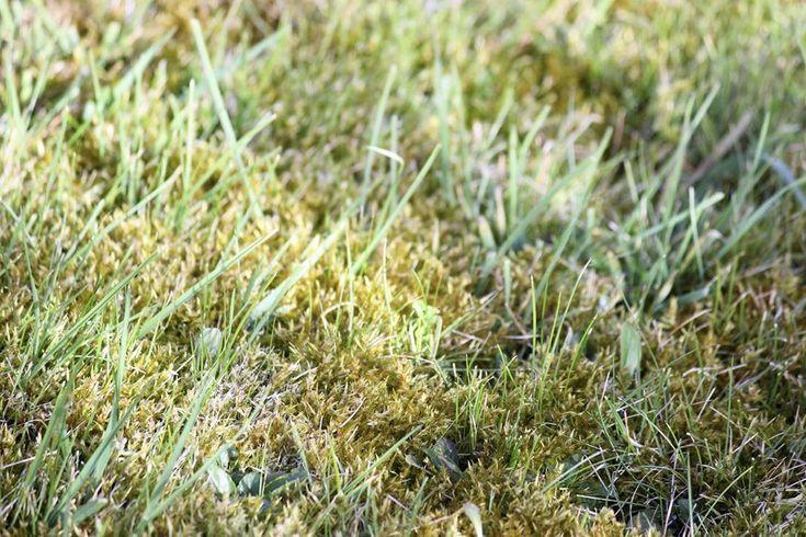 Sådan fjerner du nemt mos fra din græsplæne | idényt