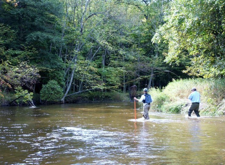 1000 images about salmon steelhead fishing nw michigan for Tippy dam fishing