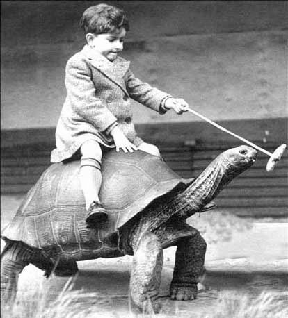 ride the tortoise!