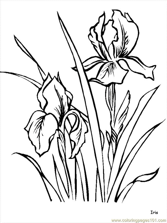 flower page printable coloring sheets free printable coloring page flower coloring pages iris natural - Pictures Of Flowers To Color Free Printables