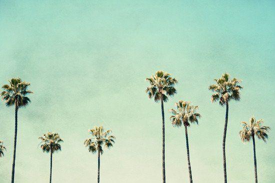 Framed Art | Palm Trees