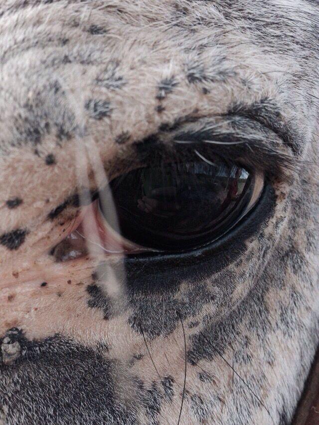 #eyes #horses #photo