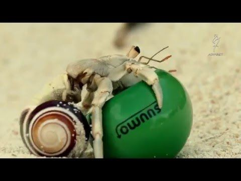 "Creative Advertising Campaign SUUMO(スーモ 広告キャンペーン) ""Shell we move?"" - Hermit Crab - YouTube"