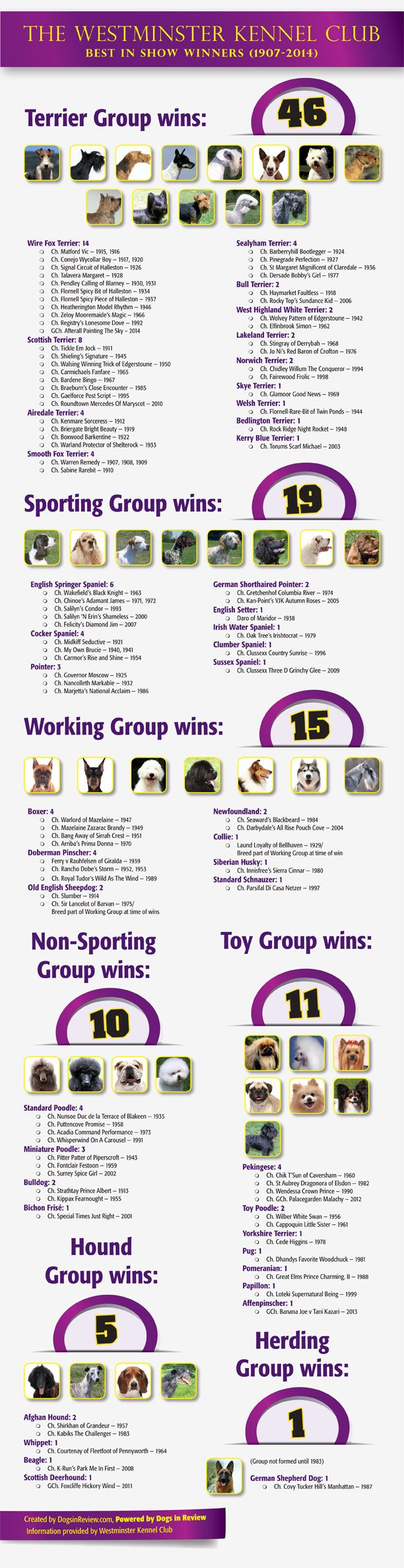 Find out which popular dog breeds have never won the Westminster Dog Show.