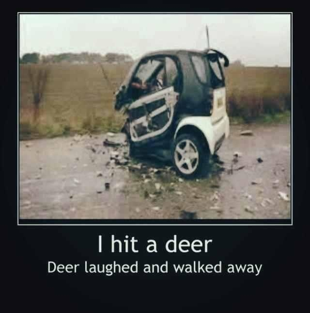 When A Redneck Buys A Smart Car