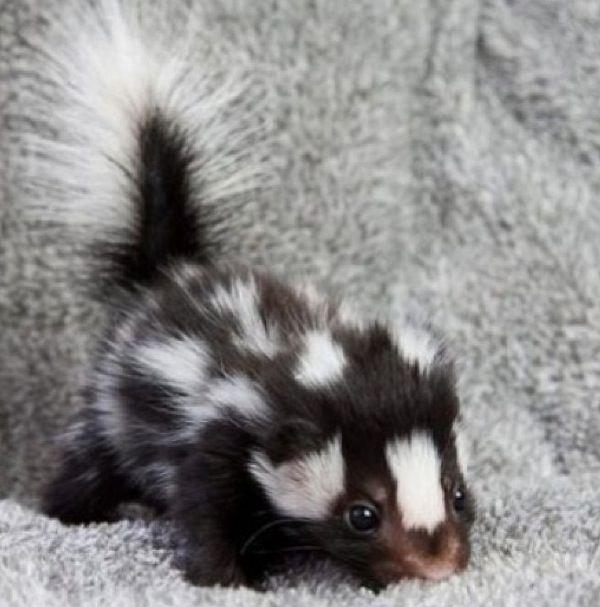 I want one so bad!!!!!