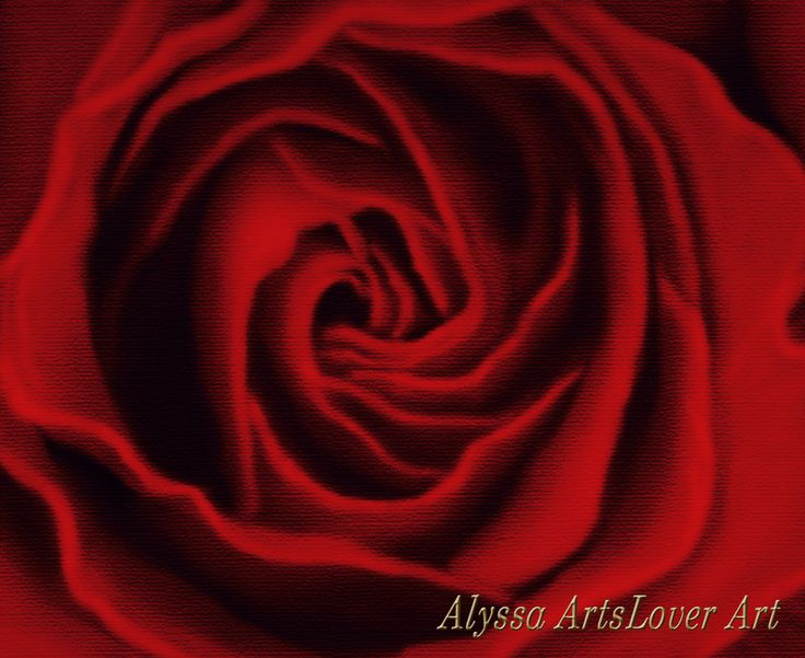 Red rose digital painting