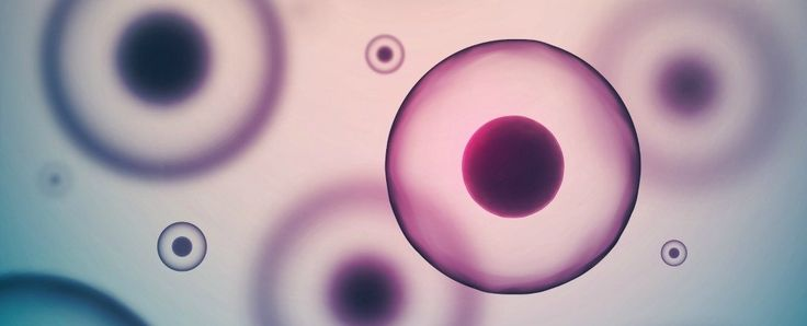 New stem cell treatment using fat cells could repair any tissue in the body - ScienceAlert