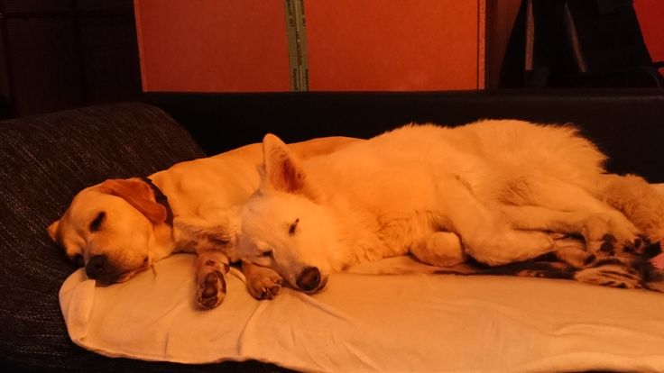 Hunde Foto: Maria und Milow und Letty - Gute Nacht und süße Träume :* Hier Dein Bild hochladen: http://ichliebehunde.com/hund-des-tages  #hund #hunde #hundebild #hundebilder #dog #dogs #dogfun  #dogpic #dogpictures