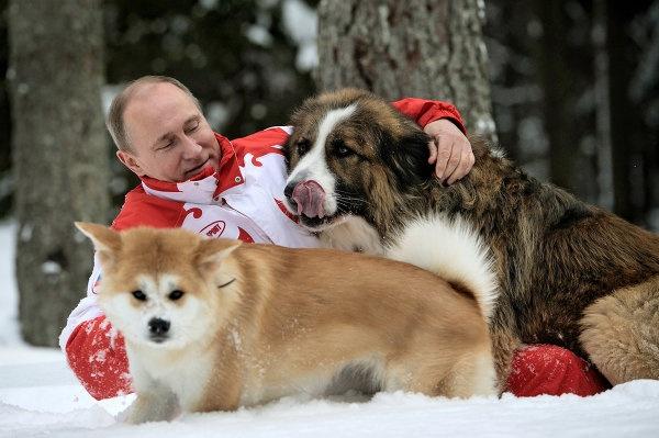 Le président Vladimir Poutine avec Buffy et Youmé lors d'une promenade dans la banlieue de Moscou.