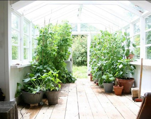If i didn't have such a knack for killing plants (and if i had a spare greenhouse lying around), i would do this.