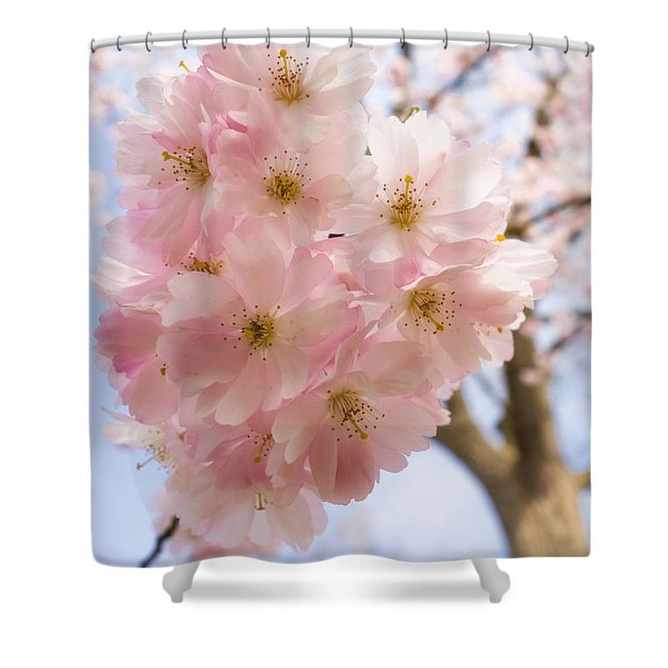 """Pink Spring Blossom Shower Curtain: Soft and beautiful bright pink cherry blossom on a tree - amazing nature in springtime!  This shower curtain is made from 100% polyester fabric and includes 12 holes at the top of the curtain for simple hanging.  The total dimensions of the shower curtain are 71"""" wide x 74"""" tall. Matthias Hauser hauserfoto.com - Art for your Home Decor and Interior Design needs."""