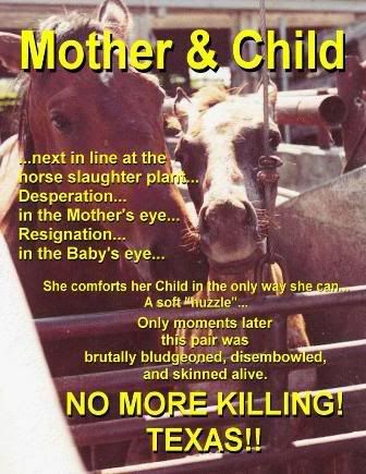 SAY NO TO ALL HORSE SLAUGHTER!! Switch places woth these poor things. Wouldnt you want justice for your kind?