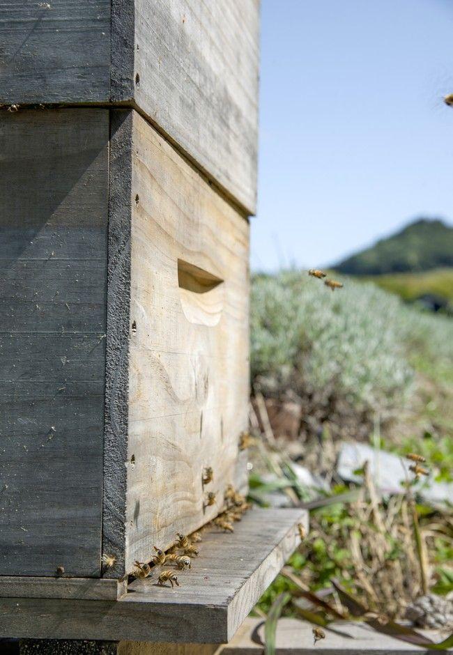 How to grow a bee-friendly garden   Good Magazine