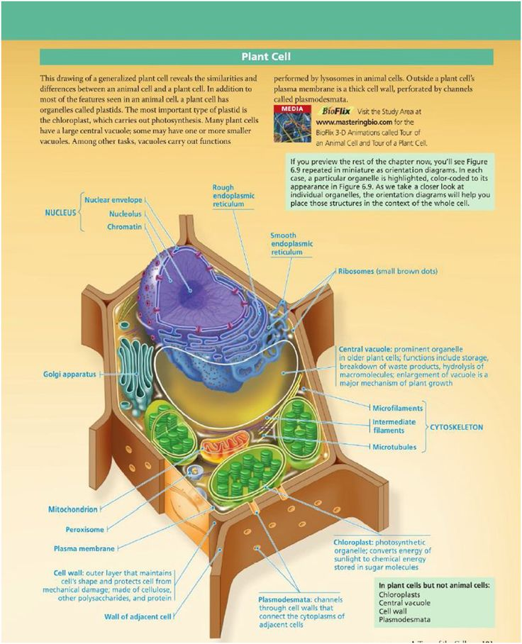 struktur sel tumbuhan Klik pada gambar untuk menuju posting mengenai perbedaan sel hewan dan sel tumbuhan