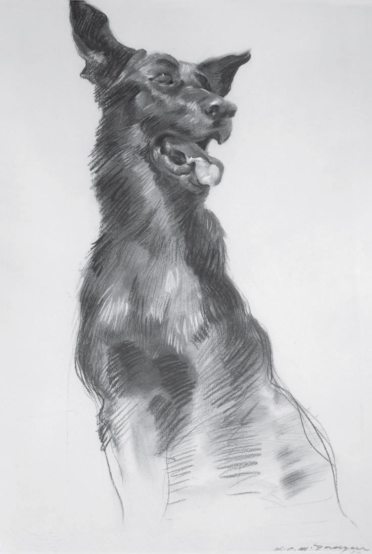 McFadyen, Ken 'Tracking Team Dog.' charcoal, rubbing out on paper, 52 x 35 cm.  #kenmcfayden #vietnamoncanvas #sandrafingerlee #vietnamwar #warart #charcoal #sketch #dog #pet #print