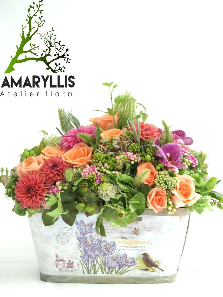 amaryllis#flori#eveniment