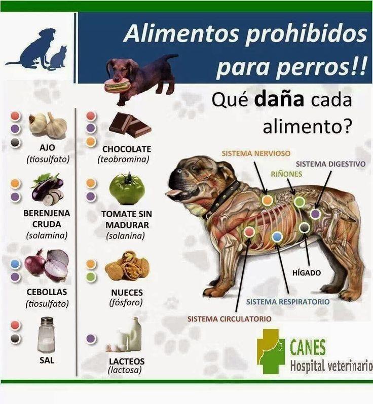 Alimentos PROHIBIDOS para perros.