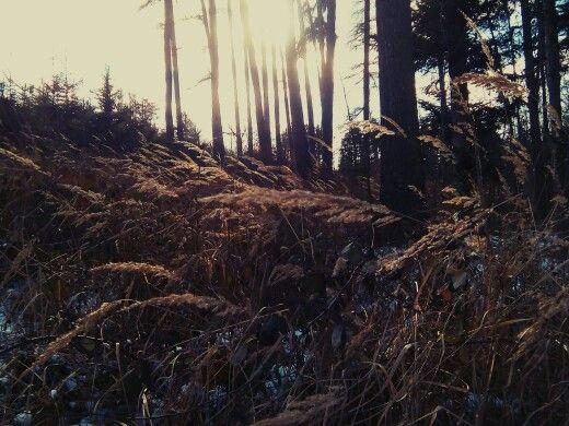 Forest, grass