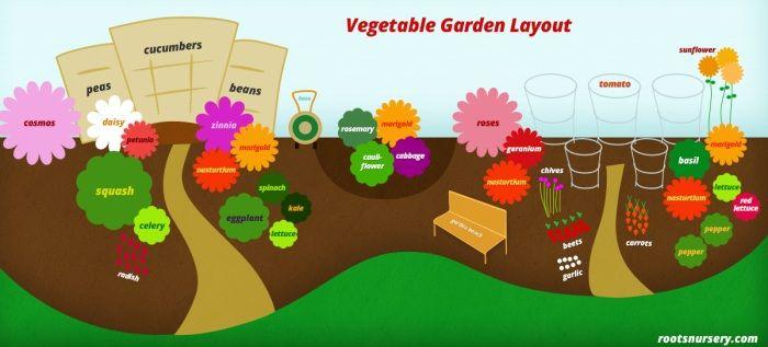Companion Planting Vegetable Garden Layout Gardens 400 x 300