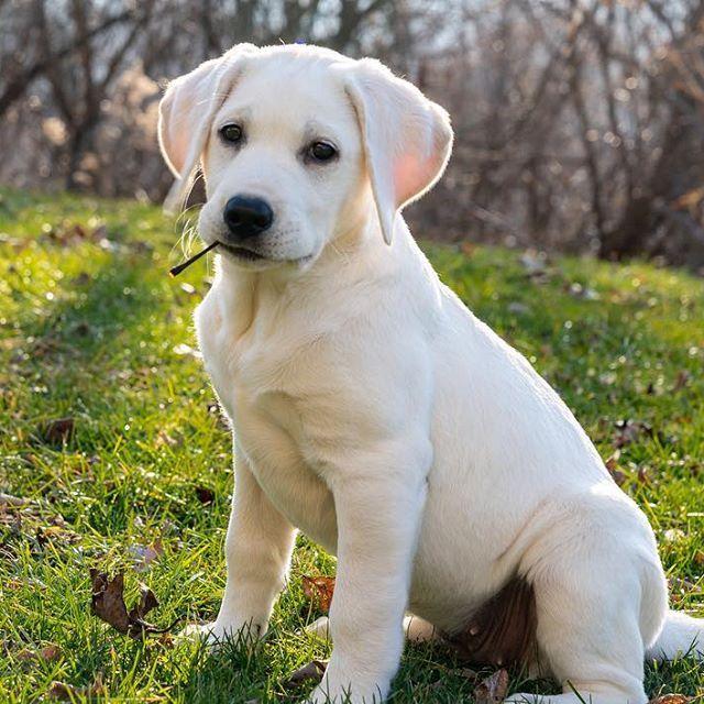 Adorable Pet Care Dog Walking Dog Walker