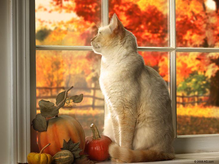 осень, хеллоуин, кот