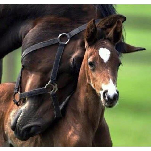 Love horses: Mothers Love, Beautiful Hors, Ponies, Baby Animal, Photo, Baby Hors, Mom, So Sweet, Foal