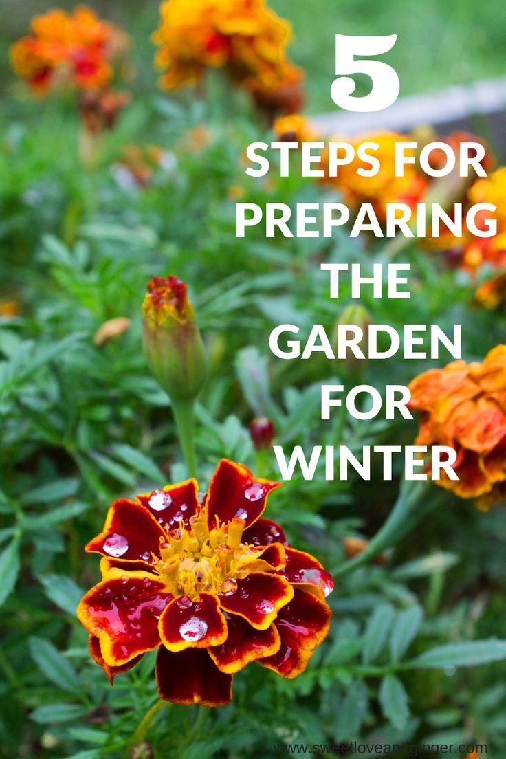 these 6 simple steps for preparing the garden for winter will be a