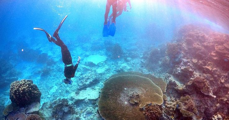 La Gran Barrera de Coral, en alerta máxima | euronews, internacionales