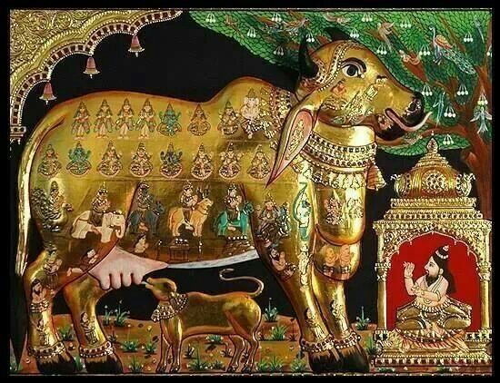 "Kamadhenu , also known as Surabhi, is a divine bovine-goddess described in Hindu mythology as the mother of all cows. She is a miraculous ""cow of plenty"" who provides her owner whatever he desires and is often portrayed as the mother of other cattle as well as the eleven Rudras."