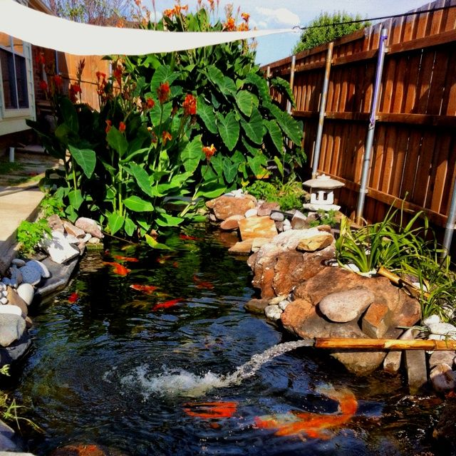 1000 images about koi ponds on pinterest for Tarpaulin fish pond