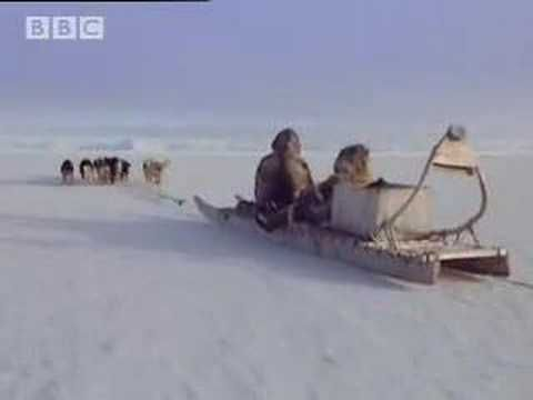 From the wonderful BBC documentary, A Boy Among Polar Bears, in which a young Inuit boy who wishes to follow in his father's footsteps to be a wildlife guide...