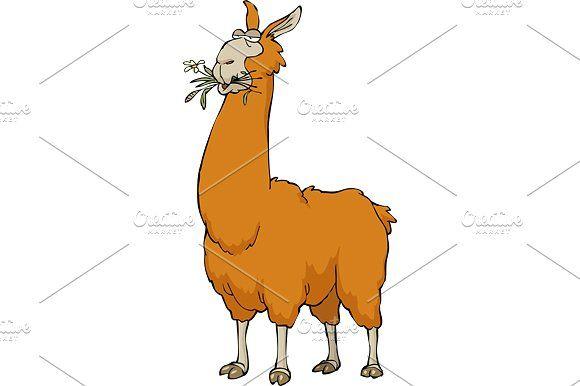 Llama chewing by dedmazay on @creativemarket