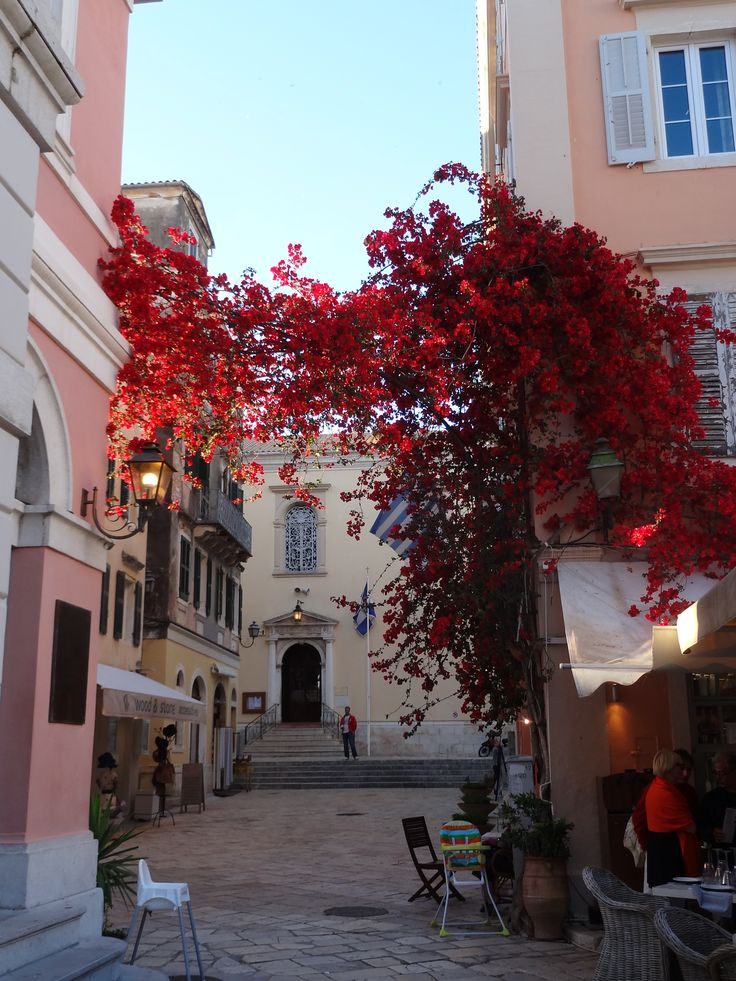 Street shaded by flowers