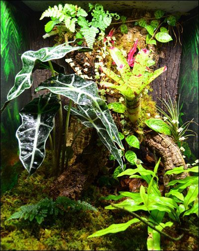 Diy Gecko Vivarium Background Terrariums Paludariums