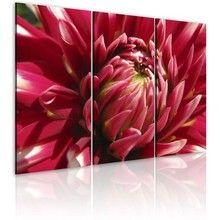 Obraz: Kwitnący ogród dalia (60x40 cm) A0 N1588 - zakup.se - Obrazy