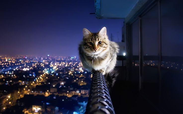 hd cats ile ilgili görsel sonucu
