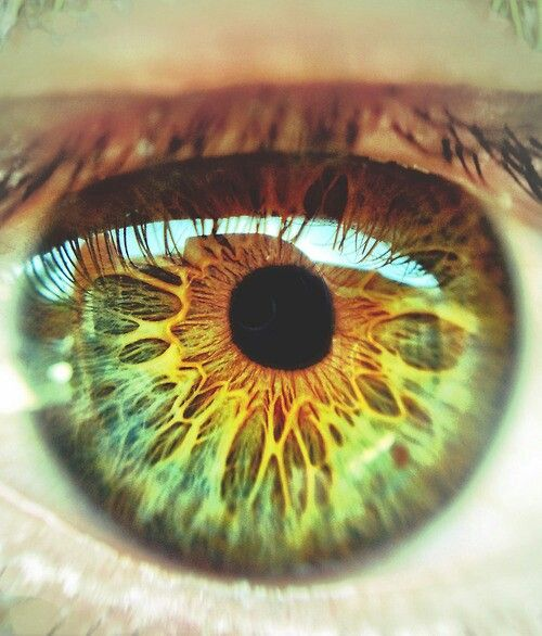 blue or green eyes with little bit yellow and brown picments