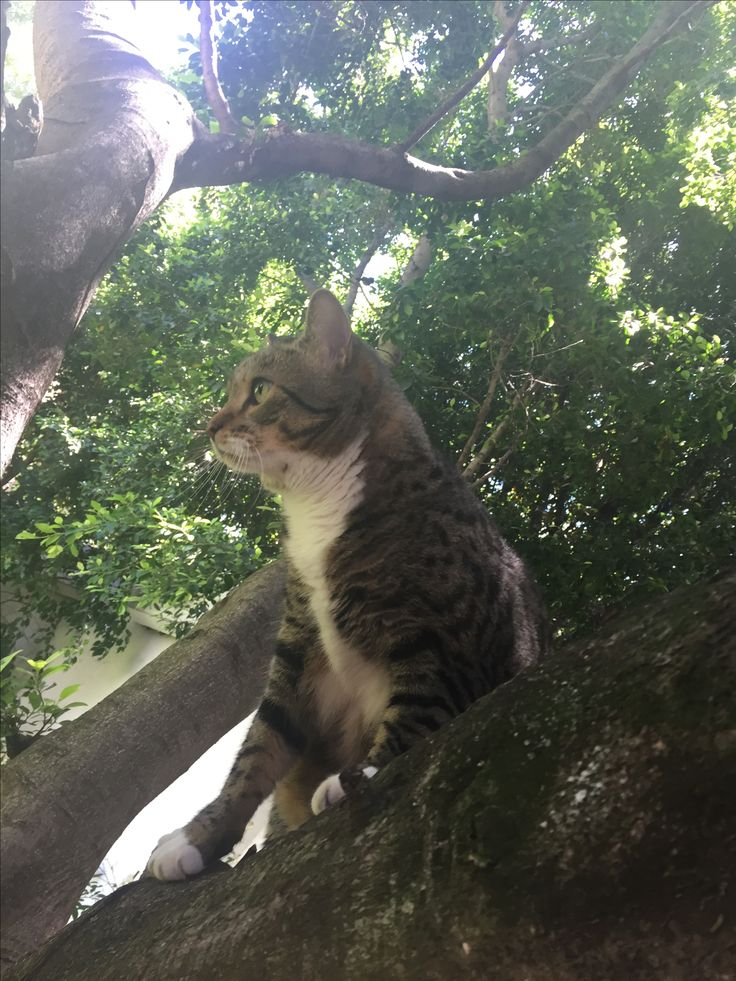 Rare photo of him in a tree, he's afraid of heights! 🙈