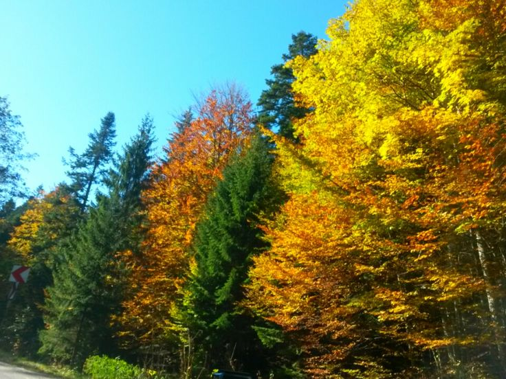 #autumn#sinaia
