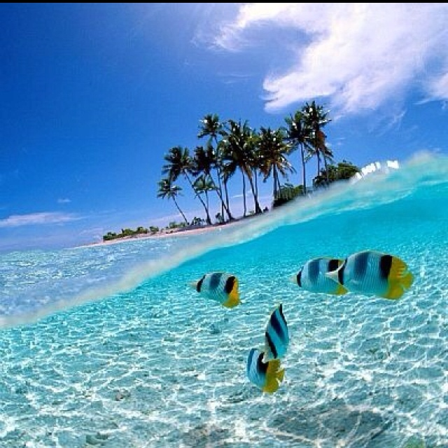 Wakatobi, Indonesia.  Dive haven.  At the top of my list for next destination. #PINdonesia