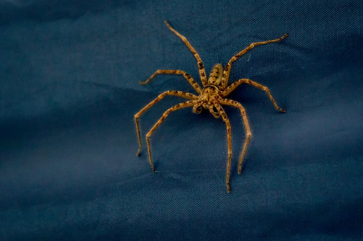 Spidermate!