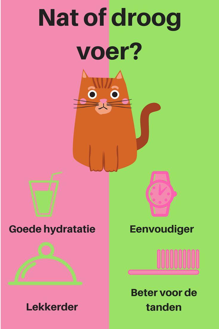 Kies je best voor nat voer of voor droog voer? | PharmaMarket heeft een ruim aanbod aan voeding voor honden en katten, zowel blikvoeding als droge brokken. De voeding focust telkens op een specifieke eigenschap of op een gezondheidsprobleem van jouw huisdier. Ook voor kittens en puppy's bestel je hier aangepast melkpoeder en zuigflesjes. Alle voeding draagt bij tot het algemeen welzijn van jouw dier.